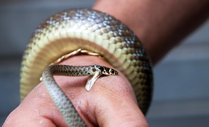 Giấc mơ thấy rắn cắn là điềm báo tốt hay xấu? 74525773