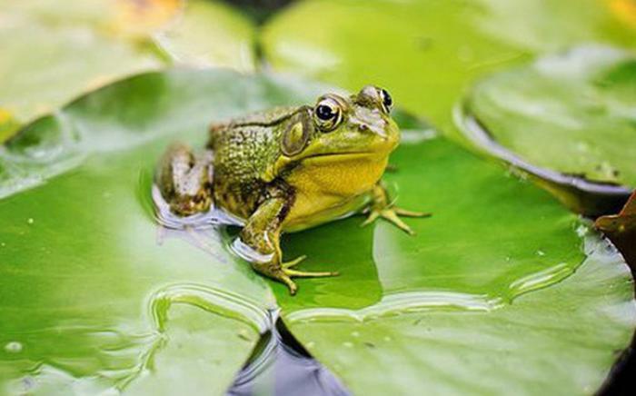 Giải mã giấc mơ thấy ếch đánh con gì ăn to trúng lớn?  559415114