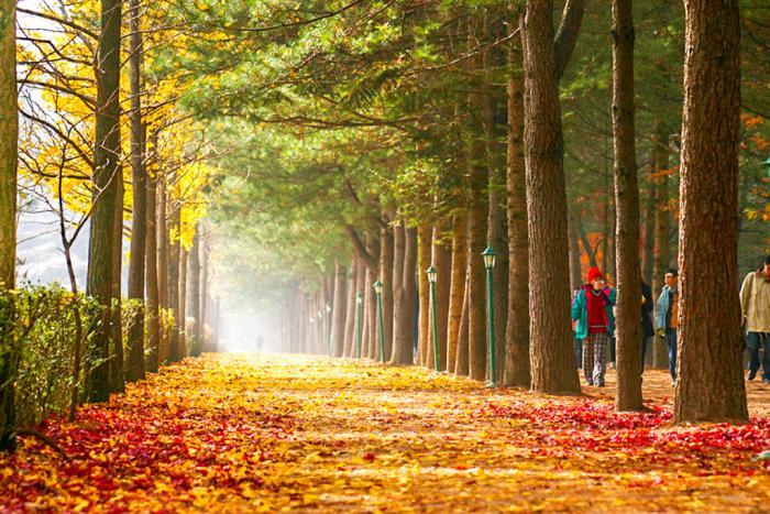 Mơ thấy cây bị rụng lá đánh con gì trúng lớn? 222884938
