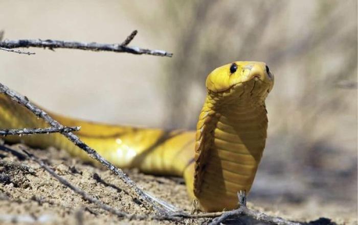 Giải mã điềm báo cho giấc mơ thấy rắn vào nhà? 633549623