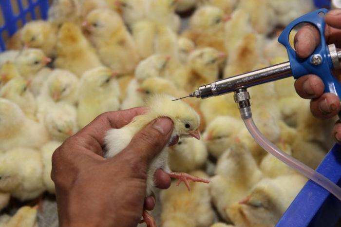 Hướng dẫn cách tiêm vacxin đậu gà chuẩn nhất  729720161
