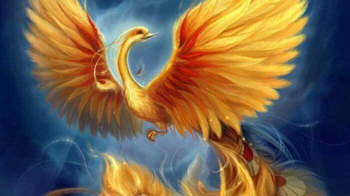 Mơ thấy chim phượng hoàng có điềm gì và đánh số con gì? 961244571