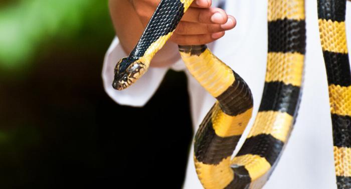 Mơ thấy rắn rắn cạp nong cạp nia đánh con gì để trúng lớn? 897296971