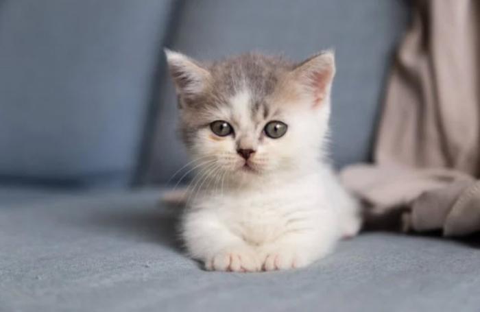 Ngủ mơ thấy mèo vào nhà đánh con gì trúng số độc đắc? 889606535