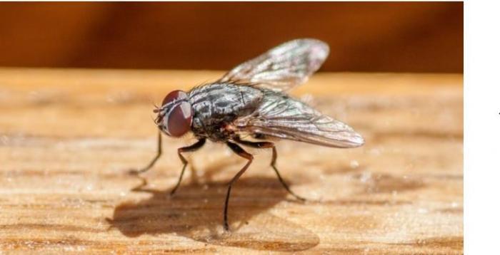 Mơ thấy con ruồi nên đánh số nào để trúng lớn? 1397089985
