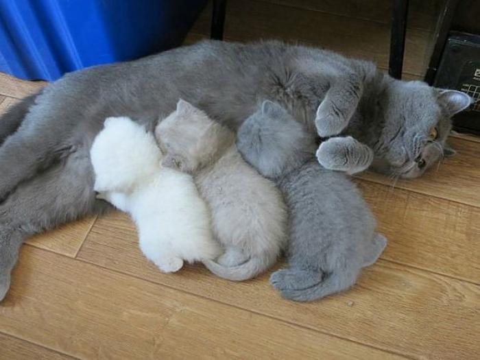 Ngủ mơ thấy mèo đẻ đánh lô đề con gì trúng lớn? 407681534