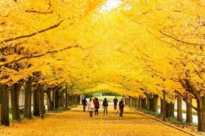 Ngủ mơ thấy cây lá vàng mang điềm báo tốt hay xấu? Đánh con gì trúng lớn? 176773331