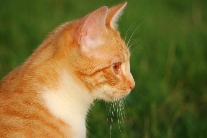 Nằm mơ thấy mèo vàng đánh con gì trúng số độc đắc? 290059342