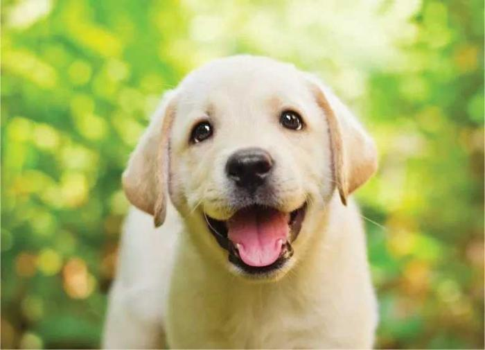 Giải mã giấc mơ thấy chó con đánh con gì trúng lớn? 1299006649