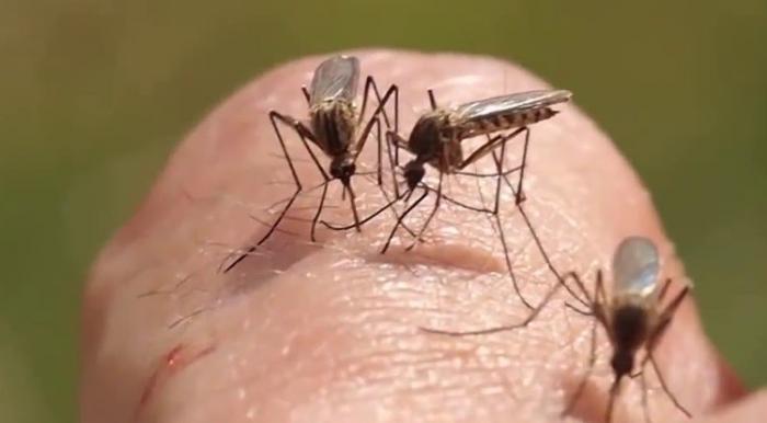 Mơ thấy con muỗi có điềm báo gì, đánh gì để trúng lớn?  365540137