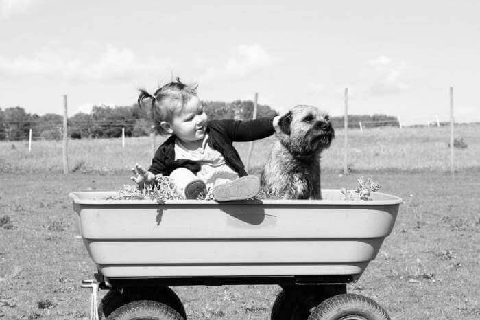 Giải mã giấc mơ thấy chó: Có điềm gì và đánh số gì chuẩn nhất? 812831011