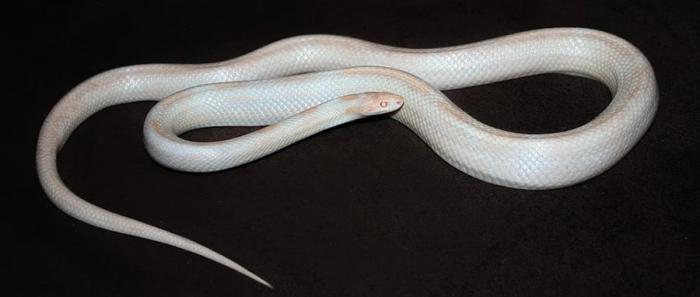 Mơ thấy rắn trắng: Giải mã giấc mơ thấy rắn trắng và đánh con gì? 1854492808