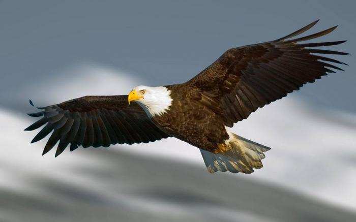 Mơ thấy chim gãy cánh đánh con gì? 1004265494