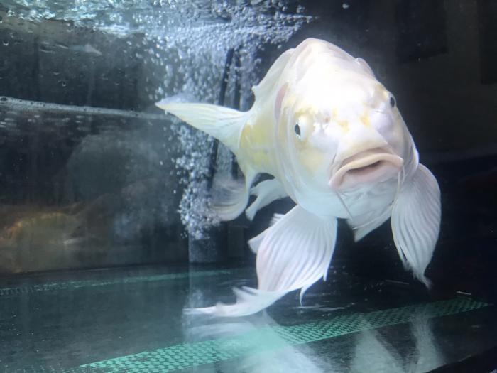 Giấc mơ thấy cá trắng mang điềm báo gì? Đánh con gì? 1275392915