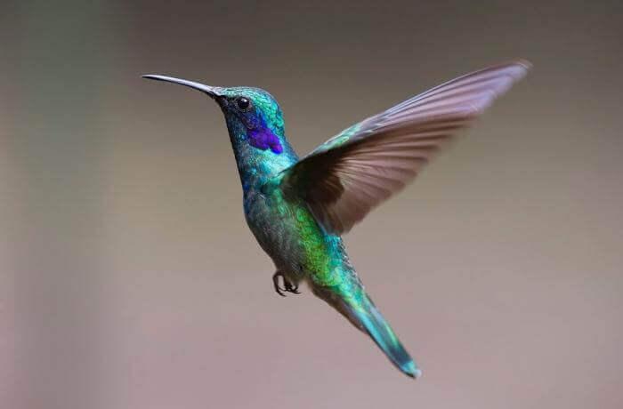 Mơ thấy chim đánh con gì trúng và ý nghĩa giấc mơ thấy chim 1183321292