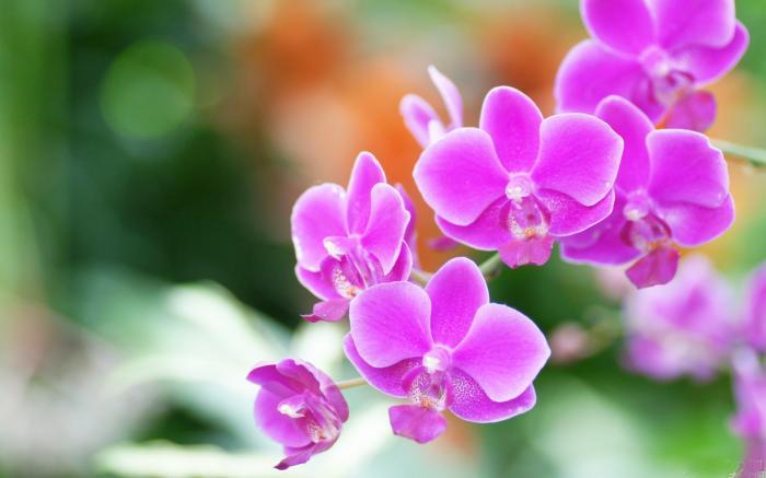 Giải mã giấc mơ thấy hoa có điềm gì, tốt hay xấu? [Chính xác] 1398304267