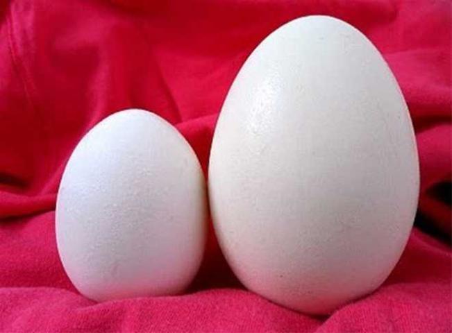 Ngủ mơ thấy trứng ngỗng đánh con gì chuẩn xác? 1923347640