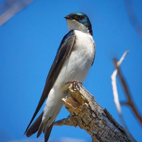 Giải mã giấc mơ thấy chim én mang đến điềm báo cùng những con số gì? 1629709050