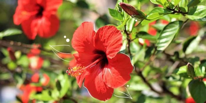 Những loại hoa được cắm trên bàn thờ 1440718943