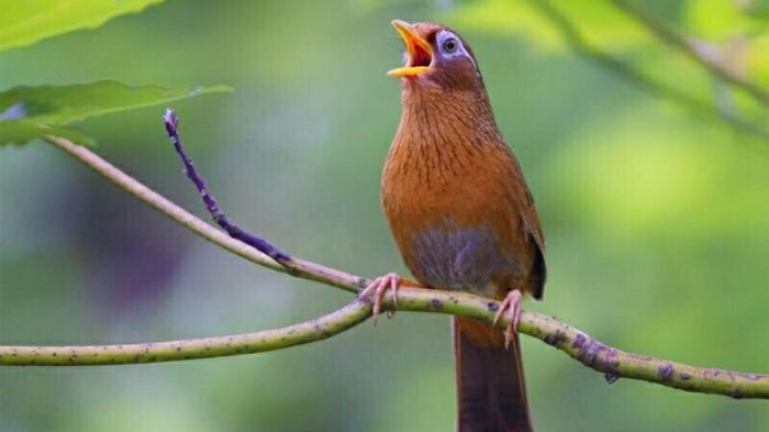 Giải mã giấc mơ thấy chim sơn ca 1666617050